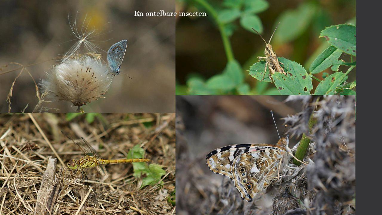 En ontelbare insecten.