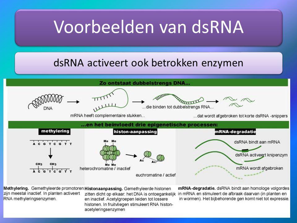 Voorbeelden van dsRNA dsRNA activeert ook betrokken enzymen