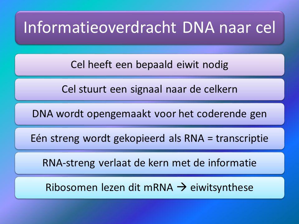 Informatieoverdracht DNA naar cel Cel heeft een bepaald eiwit nodigCel stuurt een signaal naar de celkernDNA wordt opengemaakt voor het coderende genE