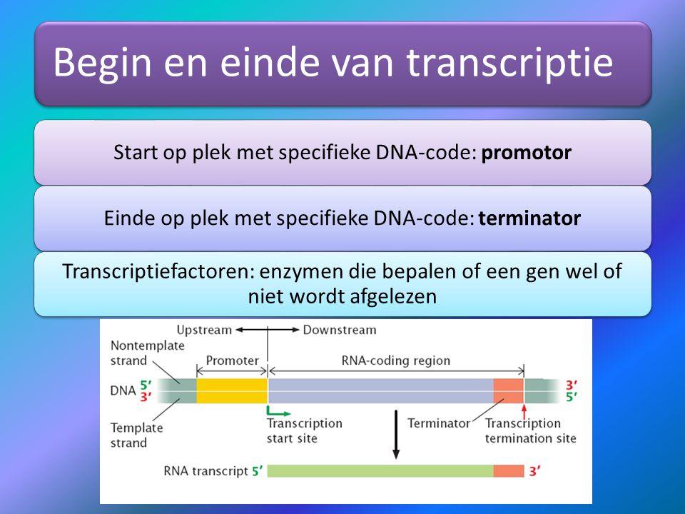 Begin en einde van transcriptie Start op plek met specifieke DNA-code: promotorEinde op plek met specifieke DNA-code: terminator Transcriptiefactoren: enzymen die bepalen of een gen wel of niet wordt afgelezen
