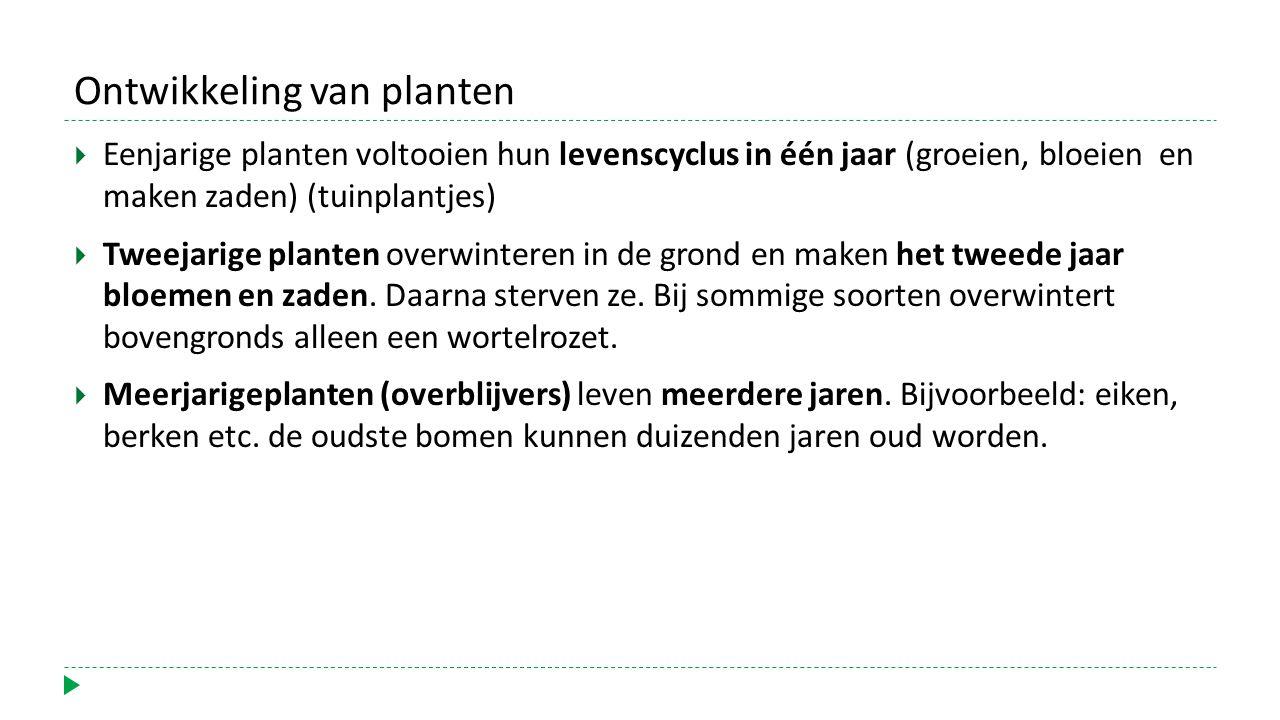 Ontwikkeling van planten  Eenjarige planten voltooien hun levenscyclus in één jaar (groeien, bloeien en maken zaden) (tuinplantjes)  Tweejarige planten overwinteren in de grond en maken het tweede jaar bloemen en zaden.