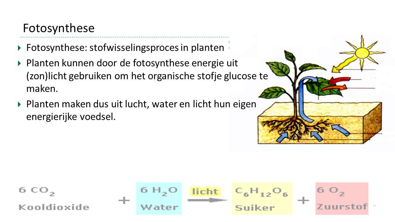 Fotosynthese  Fotosynthese: stofwisselingsproces in planten  Planten kunnen door de fotosynthese energie uit (zon)licht gebruiken om het organische stofje glucose te maken.