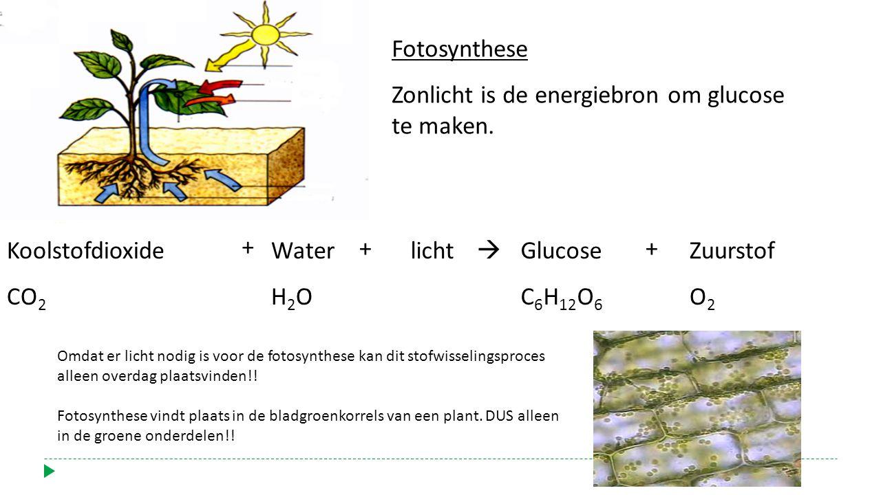 Koolstofdioxide CO 2 + Water H 2 O + licht  Glucose C 6 H 12 O 6 + Zuurstof O 2 Fotosynthese Zonlicht is de energiebron om glucose te maken. Omdat er