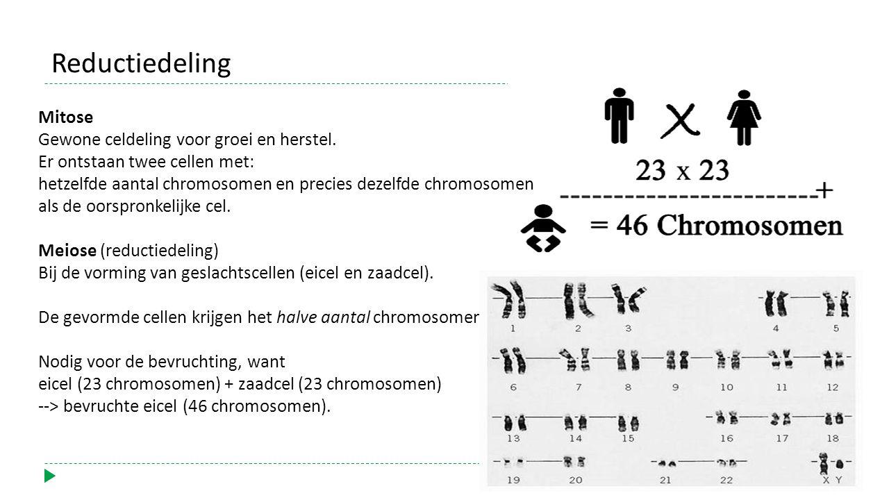 Mitose Gewone celdeling voor groei en herstel.