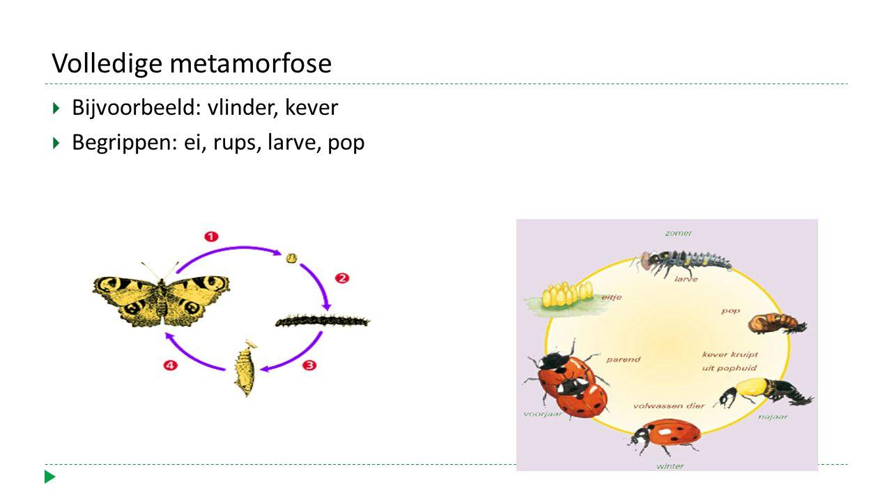 Volledige metamorfose  Bijvoorbeeld: vlinder, kever  Begrippen: ei, rups, larve, pop