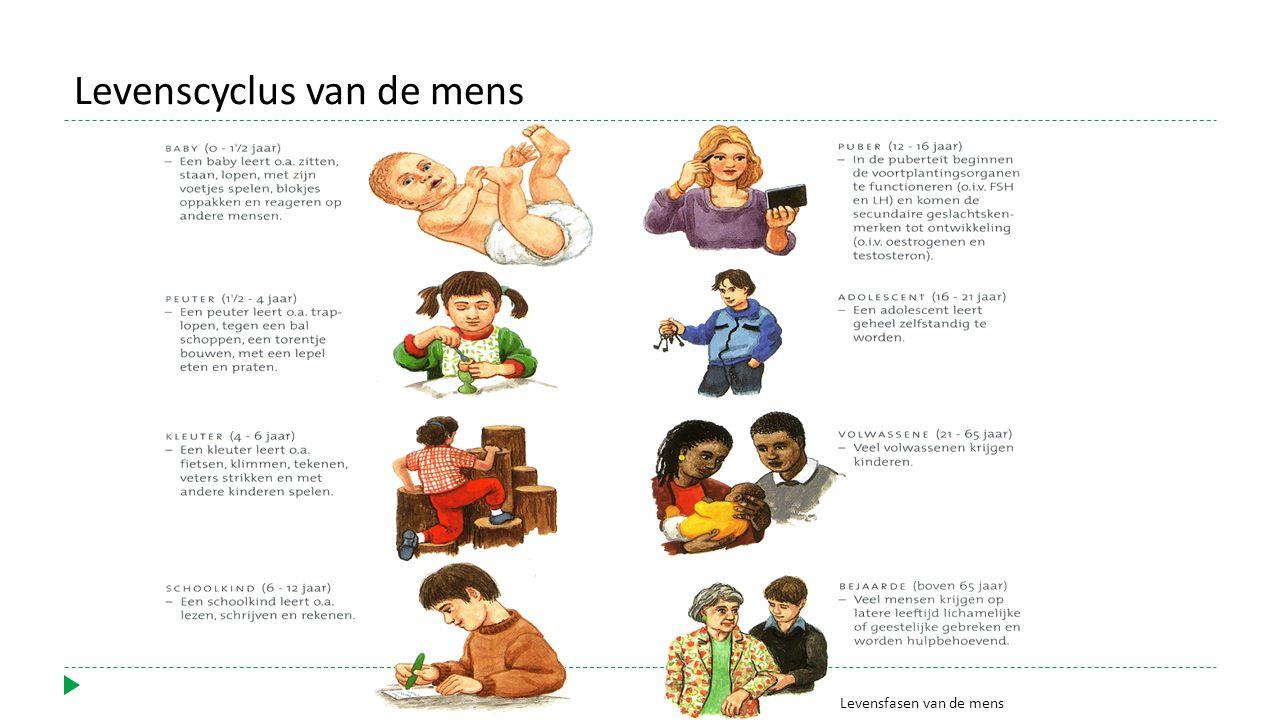 Levensfasen van de mens Levenscyclus van de mens