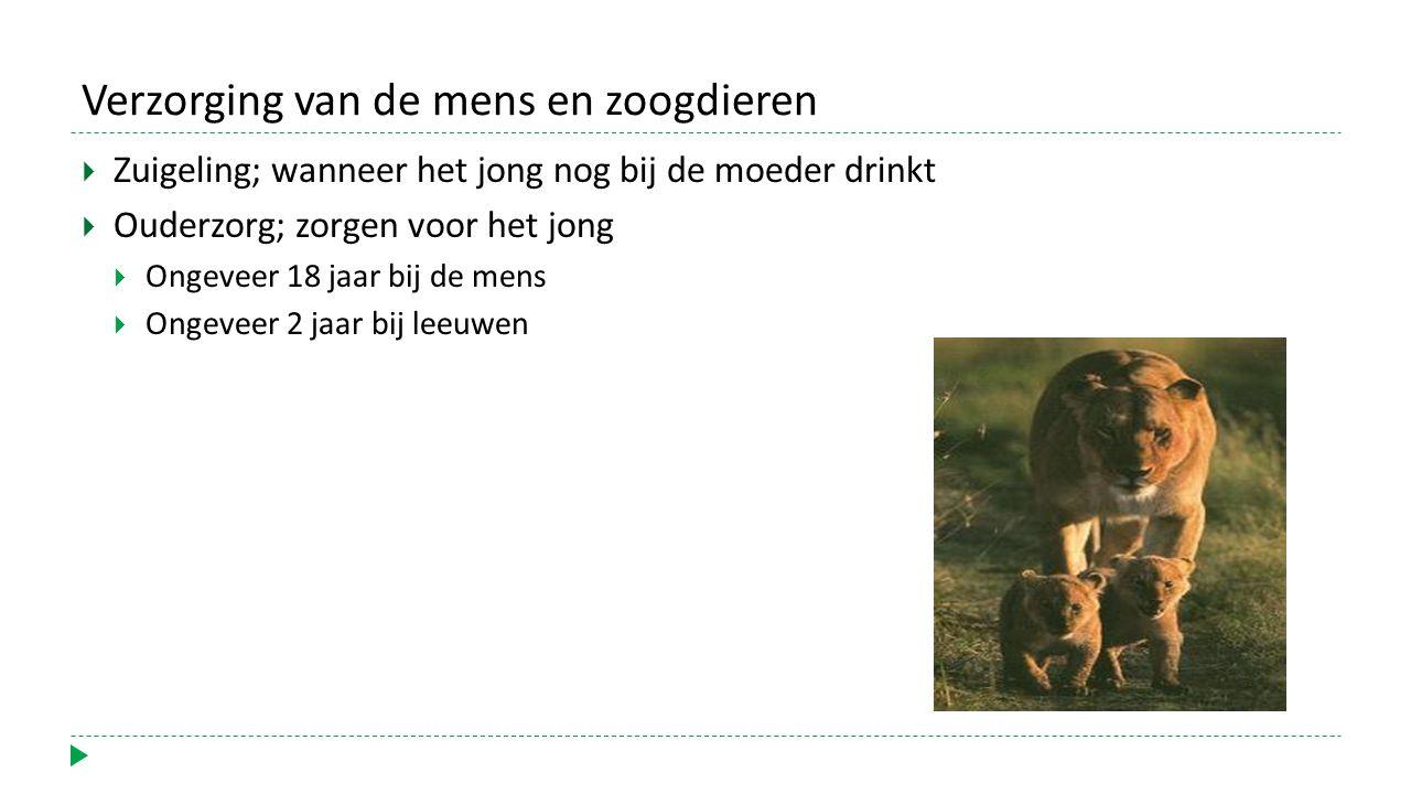 Verzorging van de mens en zoogdieren  Zuigeling; wanneer het jong nog bij de moeder drinkt  Ouderzorg; zorgen voor het jong  Ongeveer 18 jaar bij de mens  Ongeveer 2 jaar bij leeuwen