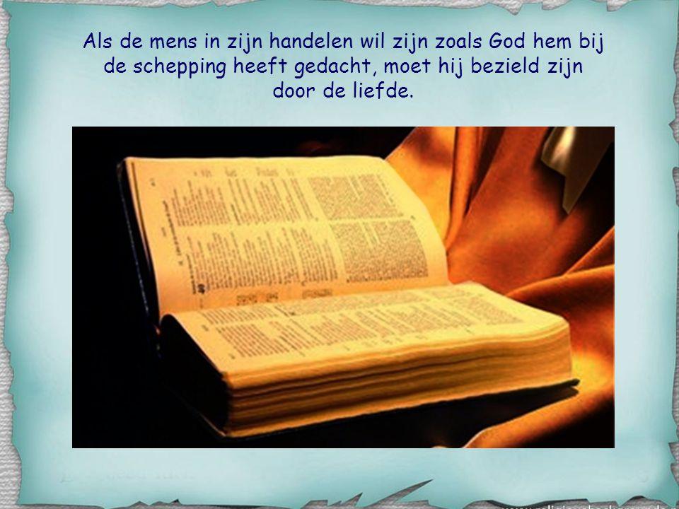 Als de mens in zijn handelen wil zijn zoals God hem bij de schepping heeft gedacht, moet hij bezield zijn door de liefde.