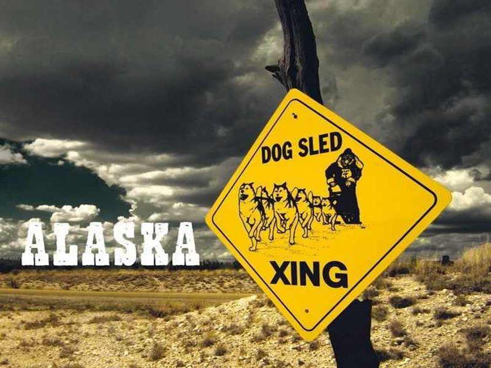 ALASKA (« continent » in het Inuit) is de grootste staat van de Verenigde Staten, met een totale oppervlakte van 1.717.854 km², ongeveer 54 maal die van België.