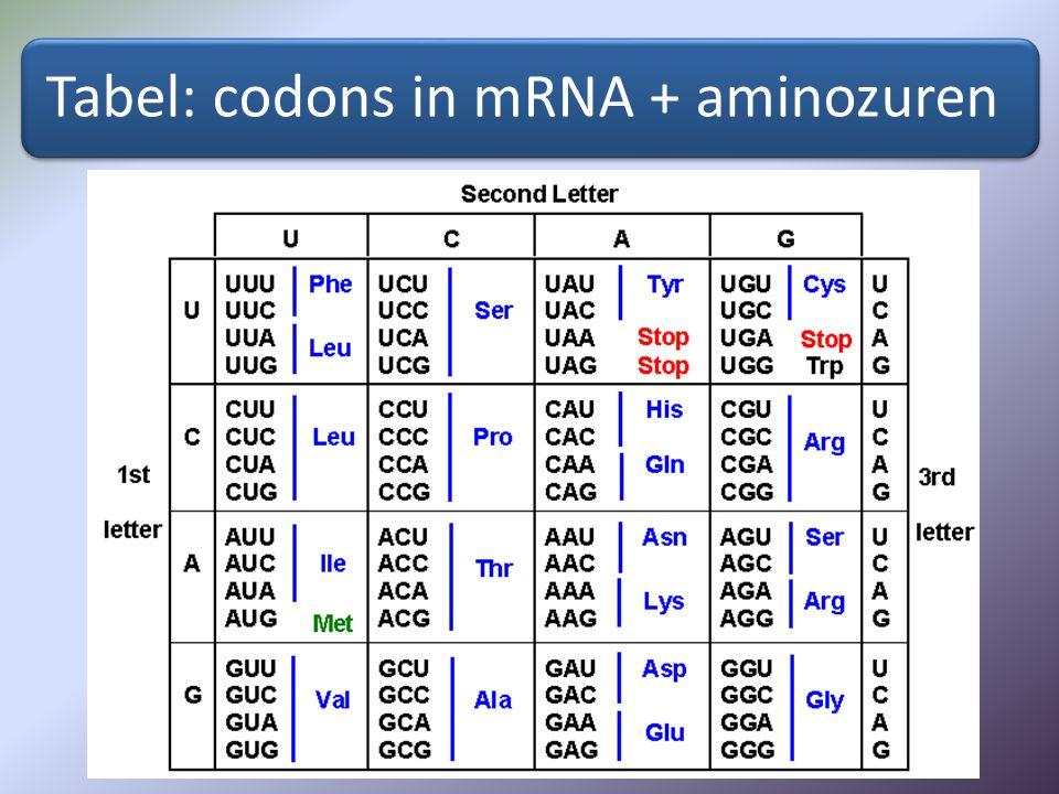 Tabel: codons in mRNA + aminozuren