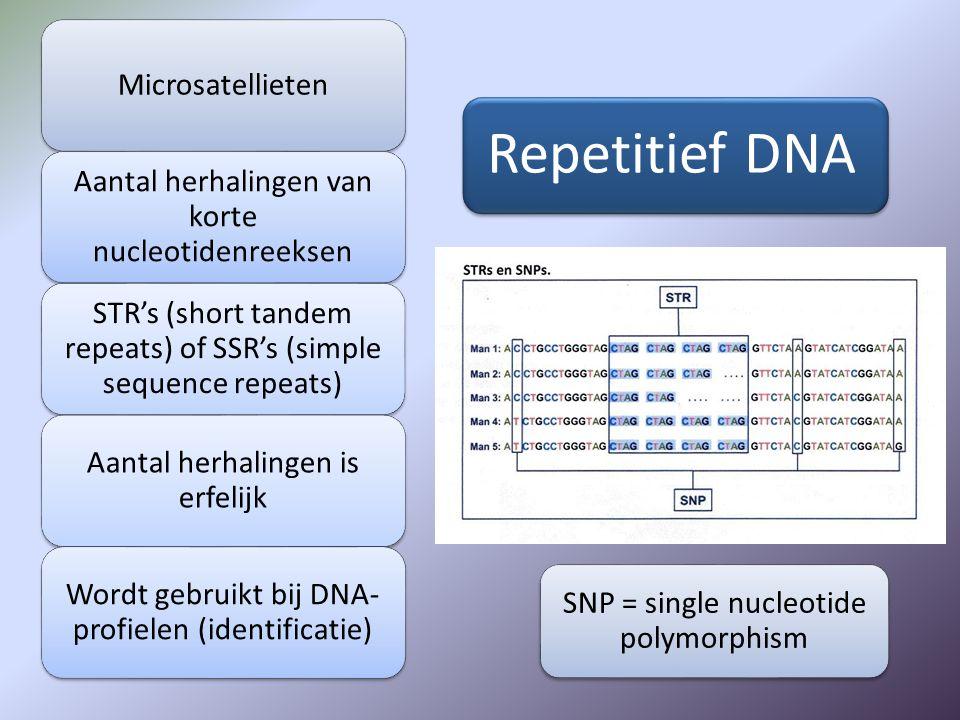 Repetitief DNA Microsatellieten Aantal herhalingen van korte nucleotidenreeksen STR's (short tandem repeats) of SSR's (simple sequence repeats) Aantal