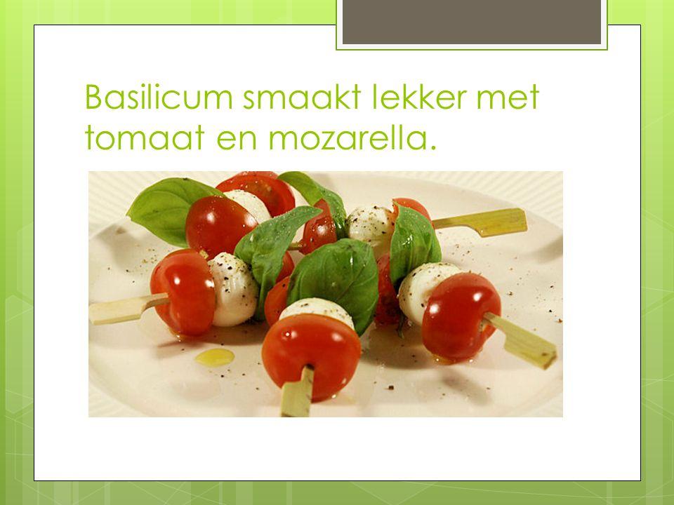 Basilicum smaakt lekker met tomaat en mozarella.