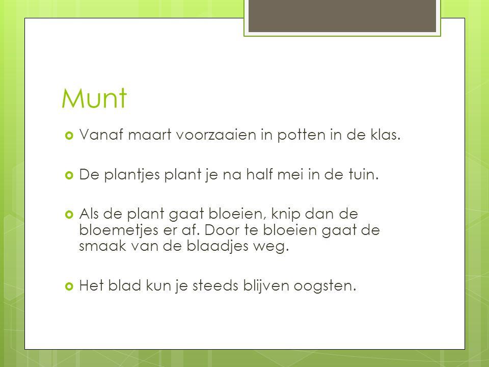  Vanaf maart voorzaaien in potten in de klas.  De plantjes plant je na half mei in de tuin.