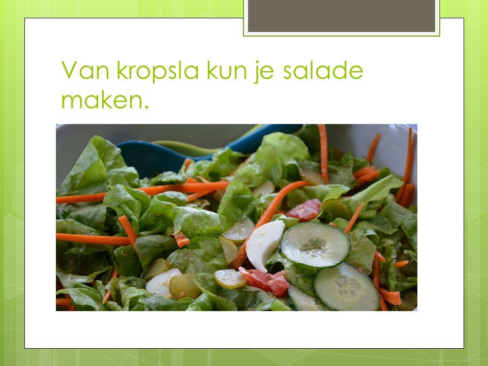 Van kropsla kun je salade maken.