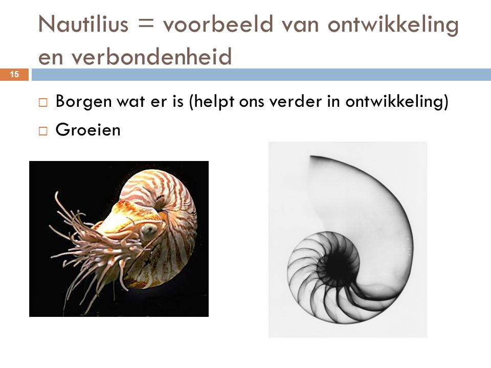 Nautilius = voorbeeld van ontwikkeling en verbondenheid 15  Borgen wat er is (helpt ons verder in ontwikkeling)  Groeien