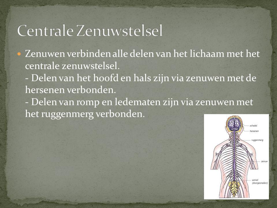 Zenuwen verbinden alle delen van het lichaam met het centrale zenuwstelsel. - Delen van het hoofd en hals zijn via zenuwen met de hersenen verbonden.