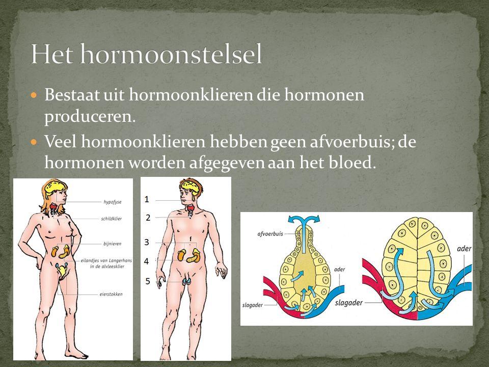 Ligging van de belangrijkste hormoonklieren: - Hypofyse: onder tegen de hersenen aan, in het midden.