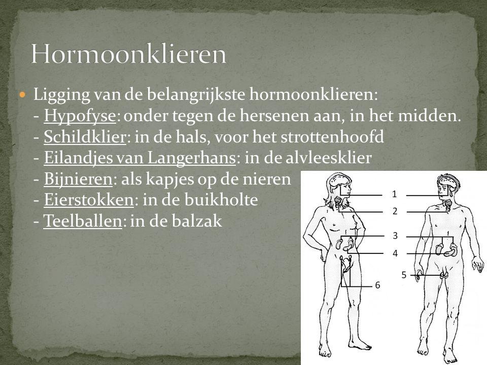 Ligging van de belangrijkste hormoonklieren: - Hypofyse: onder tegen de hersenen aan, in het midden. - Schildklier: in de hals, voor het strottenhoofd