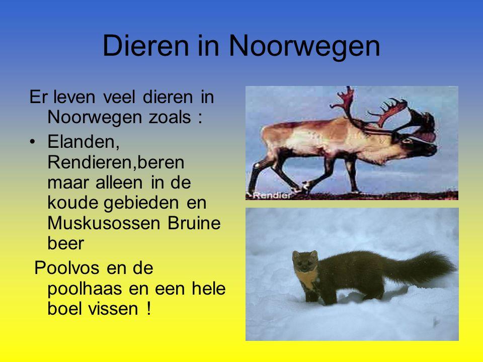 Dieren in Noorwegen Er leven veel dieren in Noorwegen zoals : Elanden, Rendieren,beren maar alleen in de koude gebieden en Muskusossen Bruine beer Poolvos en de poolhaas en een hele boel vissen !