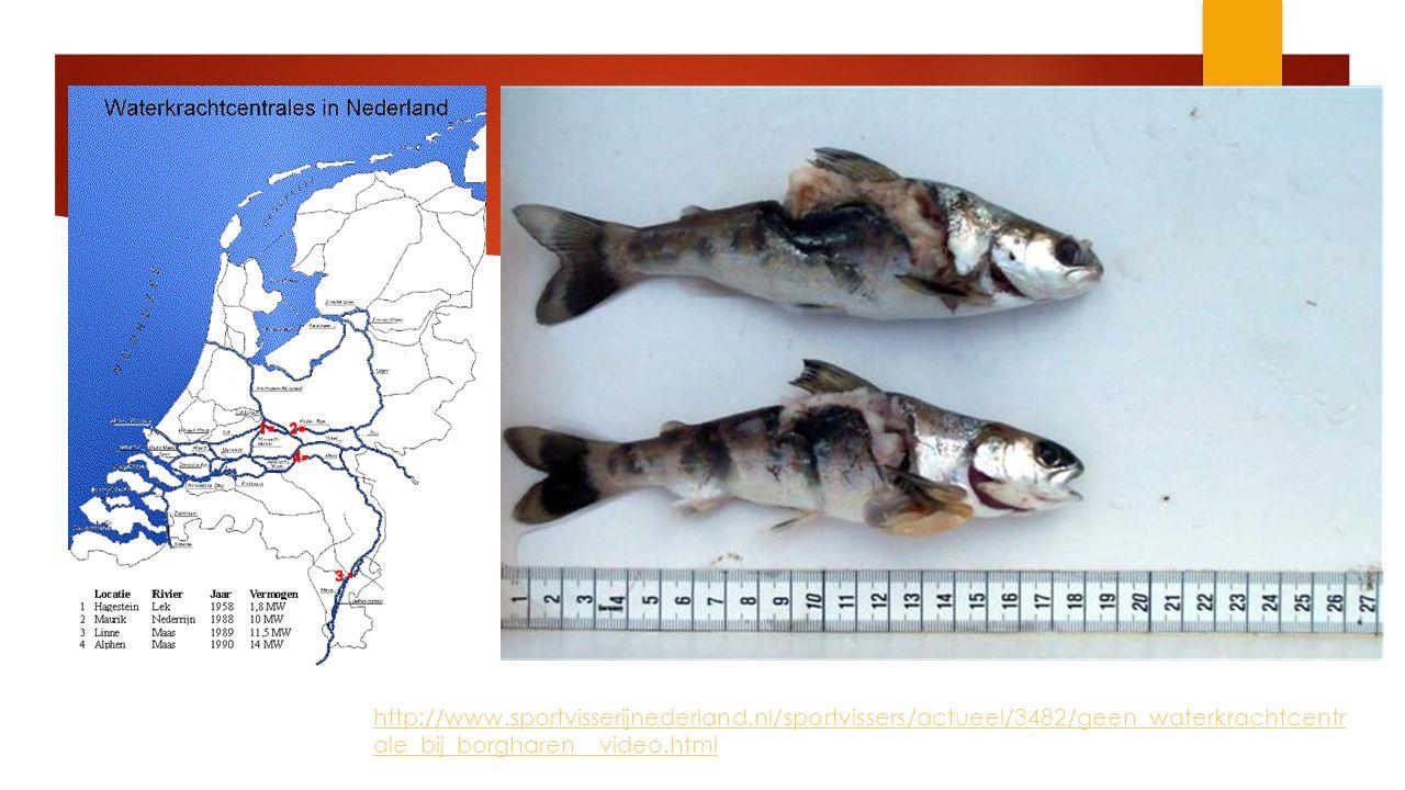 http://www.sportvisserijnederland.nl/sportvissers/actueel/3482/geen_waterkrachtcentr ale_bij_borgharen__video.html