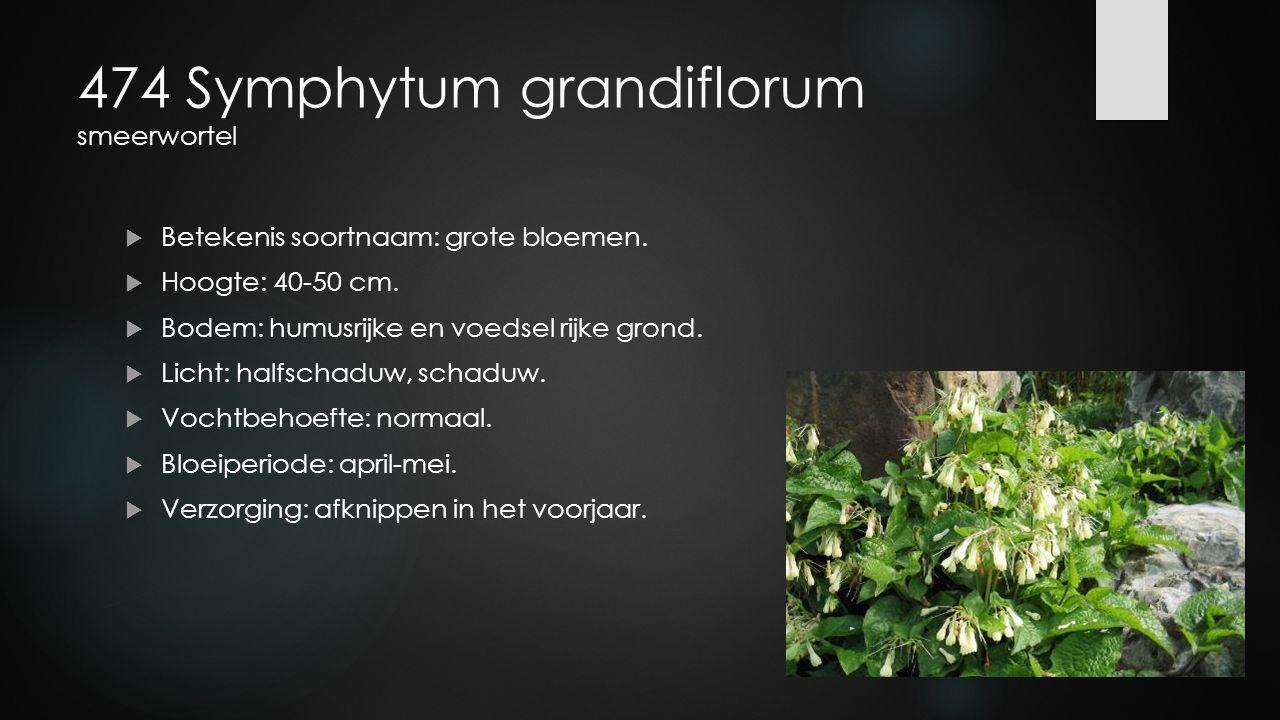 474 Symphytum grandiflorum smeerwortel  Betekenis soortnaam: grote bloemen.  Hoogte: 40-50 cm.  Bodem: humusrijke en voedsel rijke grond.  Licht: