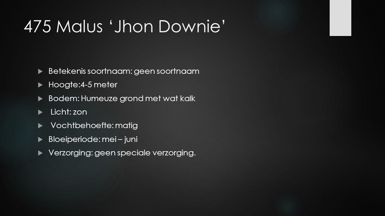 475 Malus 'Jhon Downie'  Betekenis soortnaam: geen soortnaam  Hoogte:4-5 meter  Bodem: Humeuze grond met wat kalk  Licht: zon  Vochtbehoefte: mat