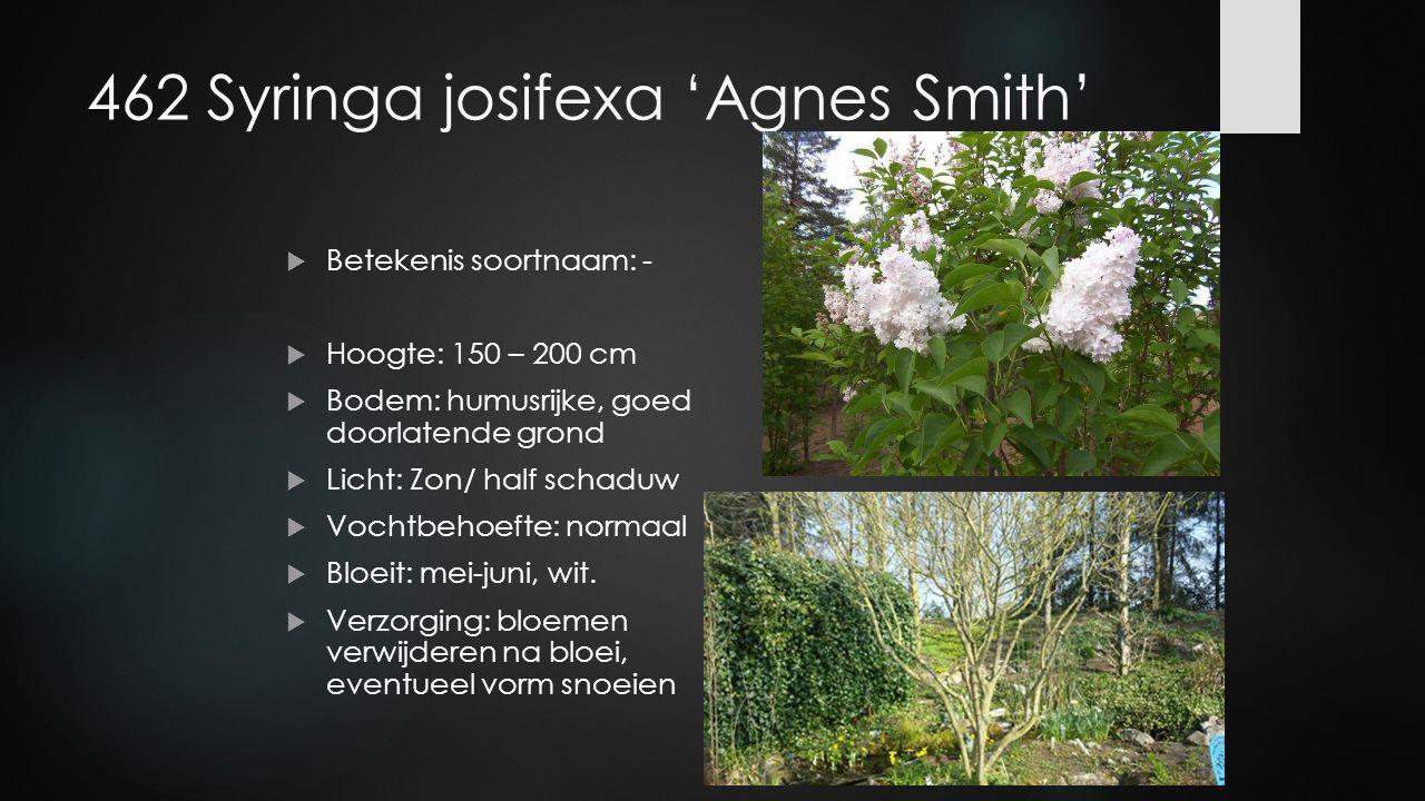 462 Syringa josifexa 'Agnes Smith'  Betekenis soortnaam: -  Hoogte: 150 – 200 cm  Bodem: humusrijke, goed doorlatende grond  Licht: Zon/ half scha
