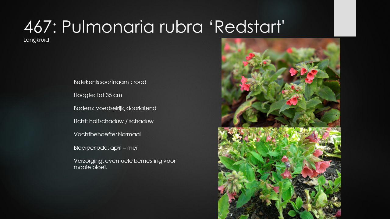 467: Pulmonaria rubra 'Redstart' Longkruid Betekenis soortnaam : rood Hoogte: tot 35 cm Bodem: voedselrijk, doorlatend Licht: halfschaduw / schaduw Vo