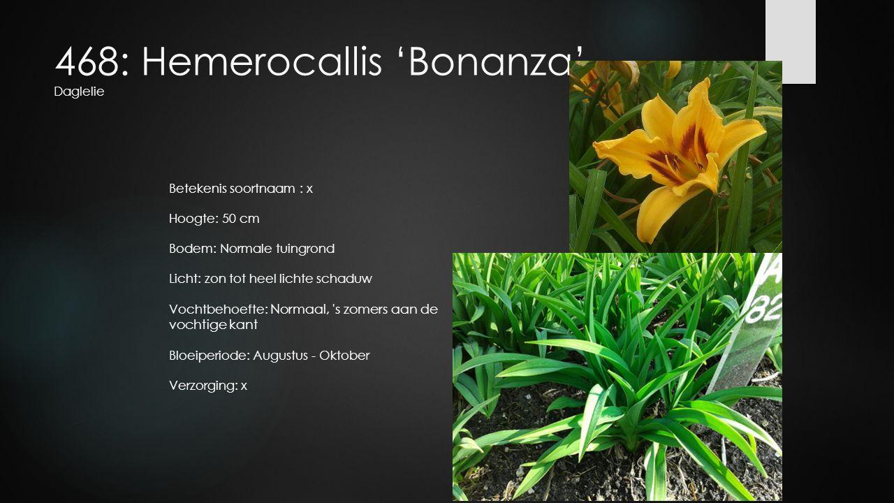 468: Hemerocallis 'Bonanza' Daglelie Betekenis soortnaam : x Hoogte: 50 cm Bodem: Normale tuingrond Licht: zon tot heel lichte schaduw Vochtbehoefte: