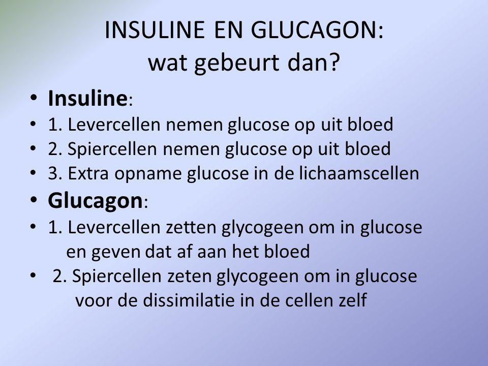 INSULINE EN GLUCAGON: wat gebeurt dan? Insuline : 1. Levercellen nemen glucose op uit bloed 2. Spiercellen nemen glucose op uit bloed 3. Extra opname