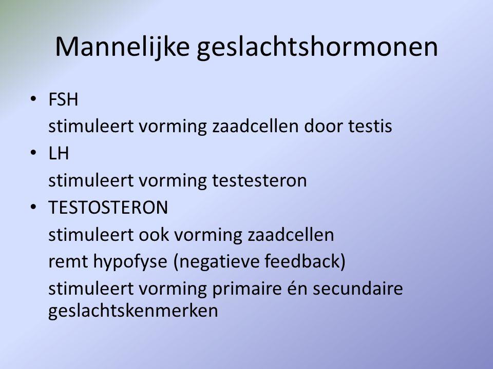 Mannelijke geslachtshormonen FSH stimuleert vorming zaadcellen door testis LH stimuleert vorming testesteron TESTOSTERON stimuleert ook vorming zaadce