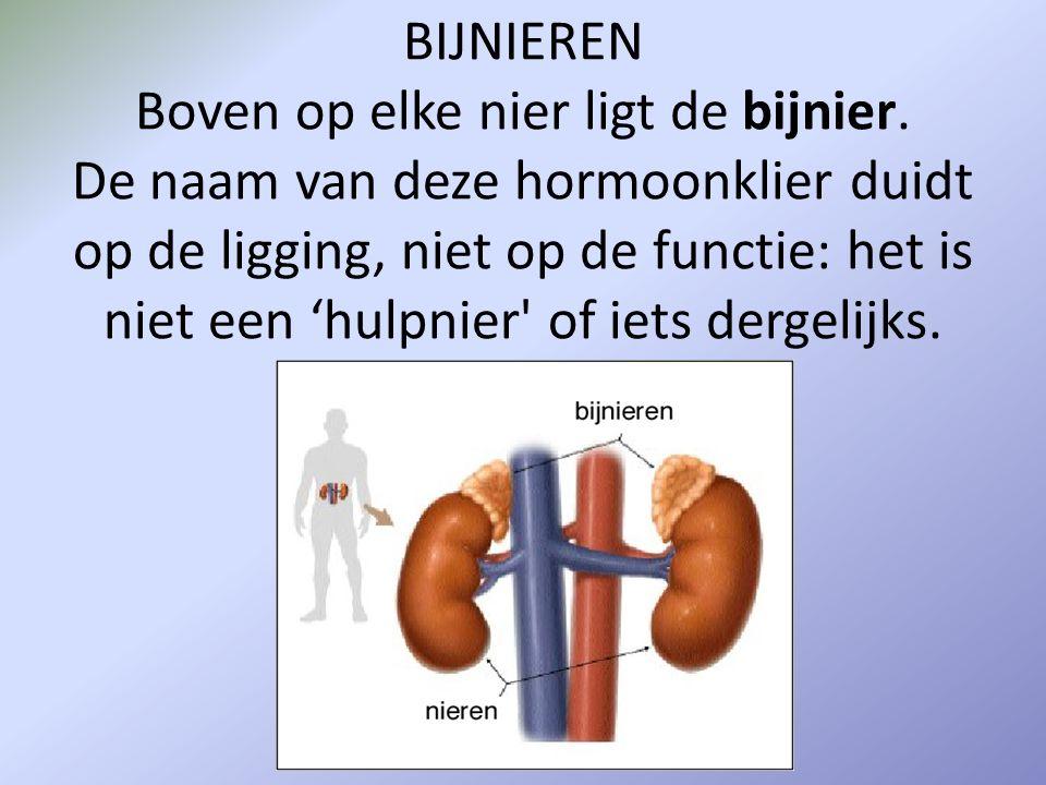 BIJNIEREN Boven op elke nier ligt de bijnier. De naam van deze hormoonklier duidt op de ligging, niet op de functie: het is niet een 'hulpnier' of iet