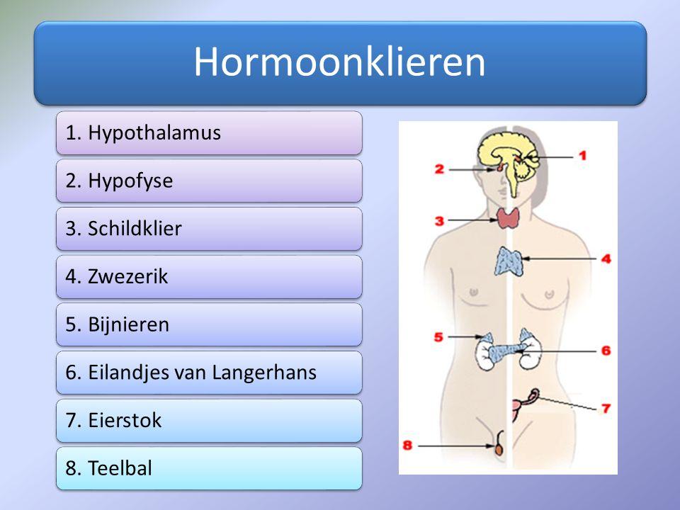 Vrouwelijke geslachtshormonen Progesteron : Wordt geproduceerd door het gele lichaam in de eierstok Negatieve terugkoppeling op de hypofyse: LH concentratie neemt langzaam af (één gele lichaam is genoeg) Stimuleert baarmoederwand tot verdere ontwikkeling én handhaving baarmoederslijmvlies (bij zwangerschap)