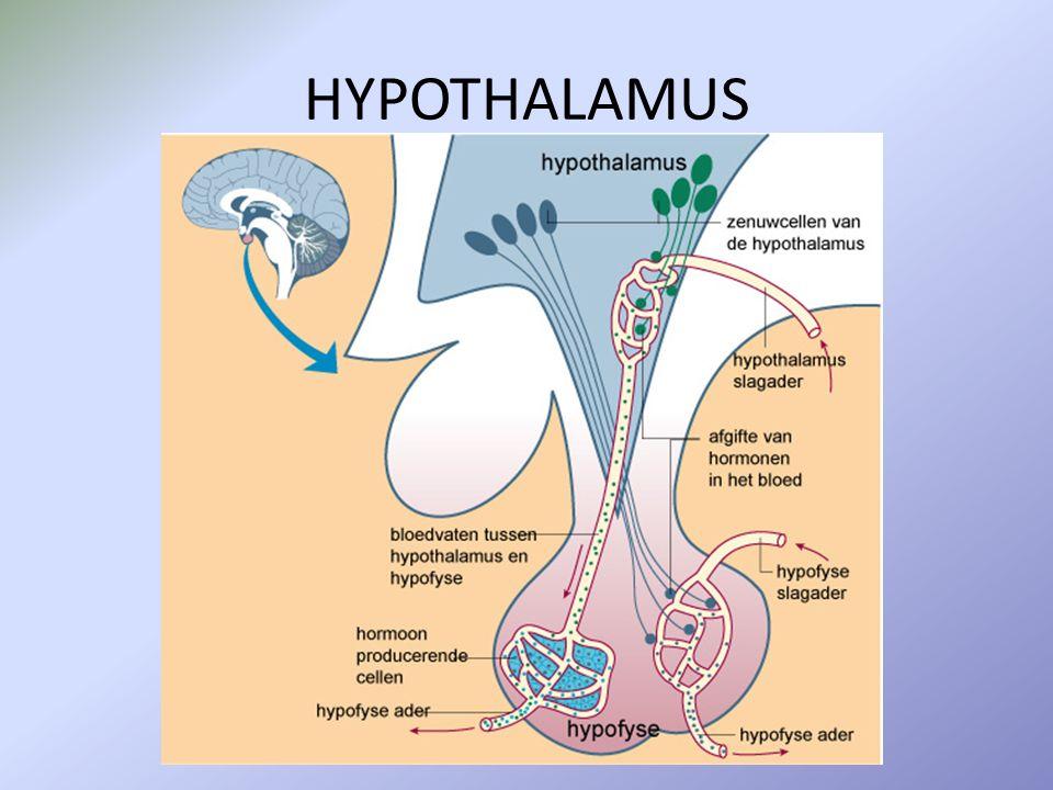 Bs 3Hormonale regeling van de voortplanting 1.De pijlen in onderstaande afbeelding geven een stimulerende of remmende invloed weer.