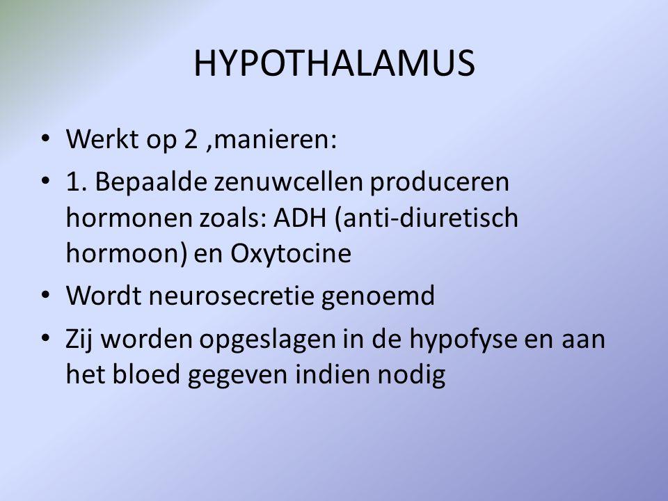 HYPOTHALAMUS 2.