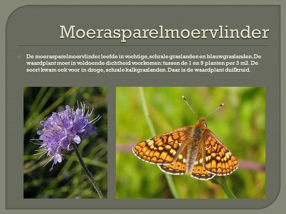  De moerasparelmoervlinder leefde in vochtige, schrale graslanden en blauwgraslanden. De waardplant moet in voldoende dichtheid voorkomen: tussen de
