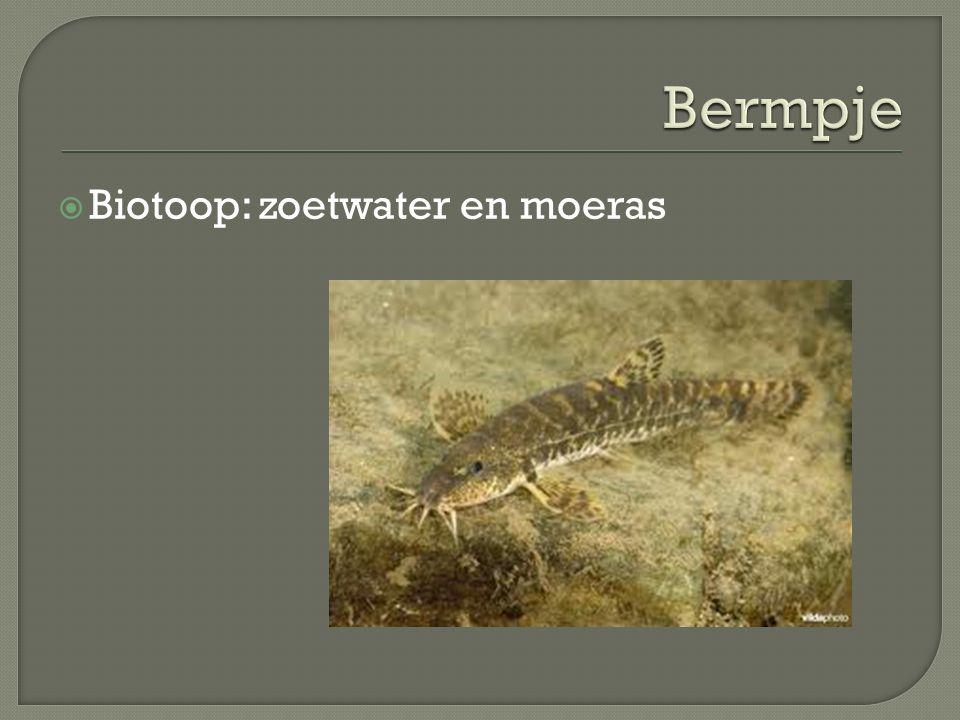  Biotoop: zoetwater en moeras