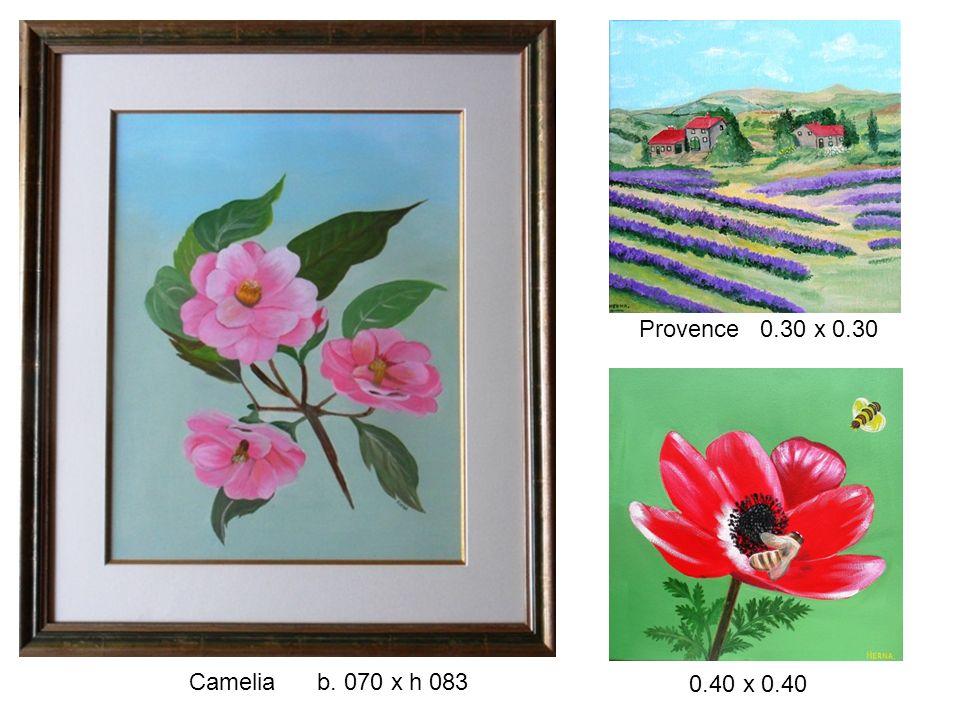Camelia b. 070 x h 083 Provence 0.30 x 0.30 0.40 x 0.40