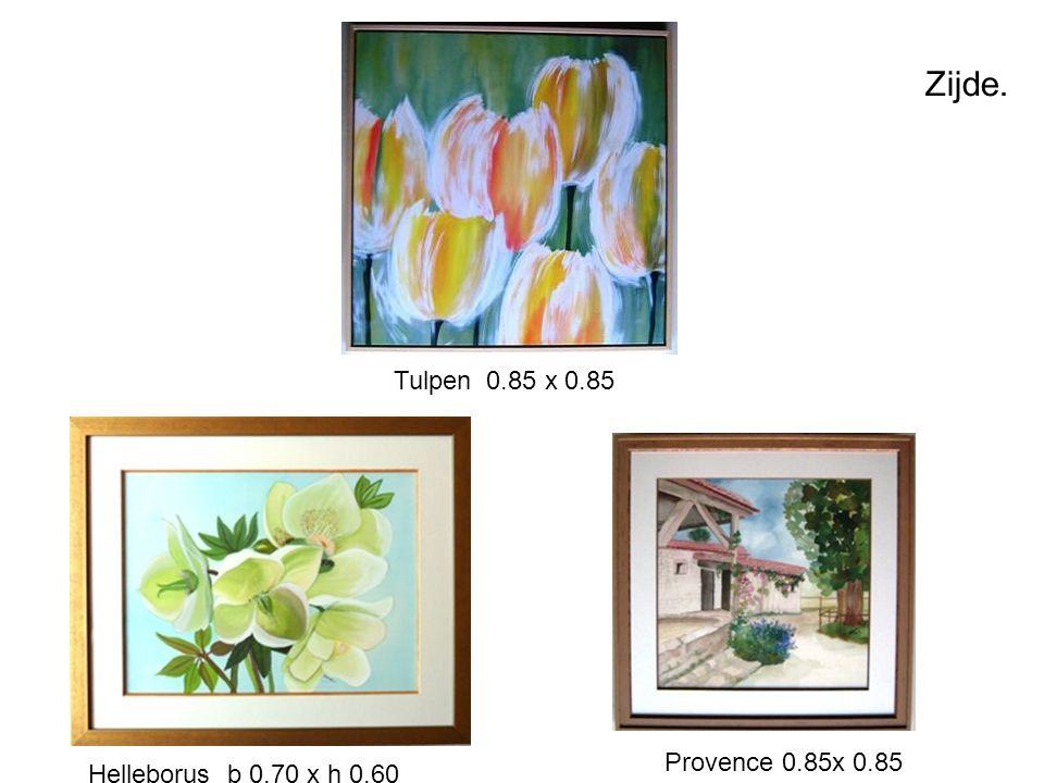 Zijde. Tulpen 0.85 x 0.85 Helleborus b 0.70 x h 0.60 Provence 0.85x 0.85
