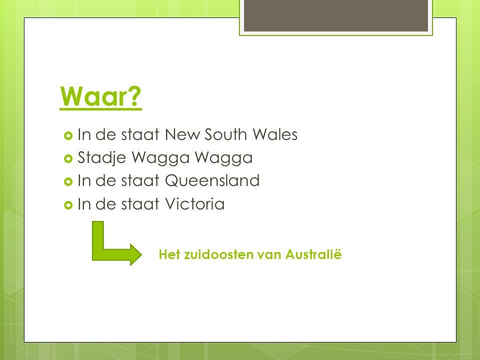 Waar?  In de staat New South Wales  Stadje Wagga Wagga  In de staat Queensland  In de staat Victoria Het zuidoosten van Australië