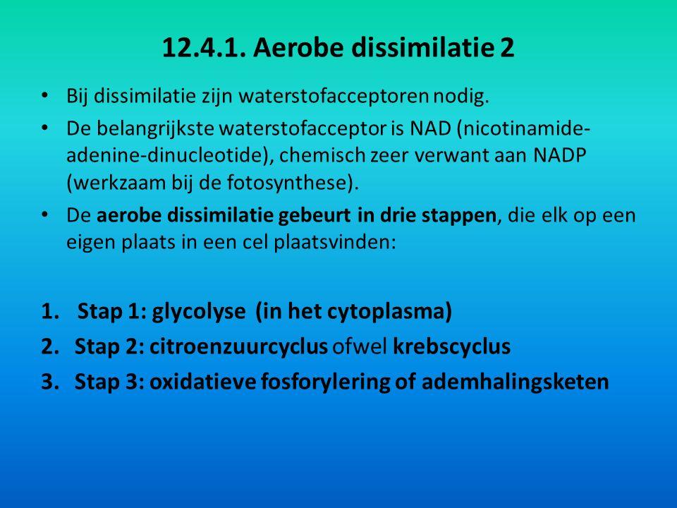12.4.1.Aerobe dissimilatie 2 Bij dissimilatie zijn waterstofacceptoren nodig.