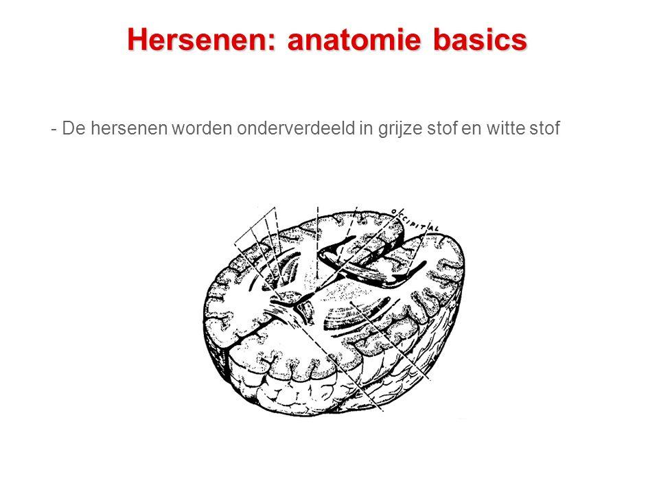 Hersenen: anatomie basics - De hersenen worden onderverdeeld in grijze stof en witte stof