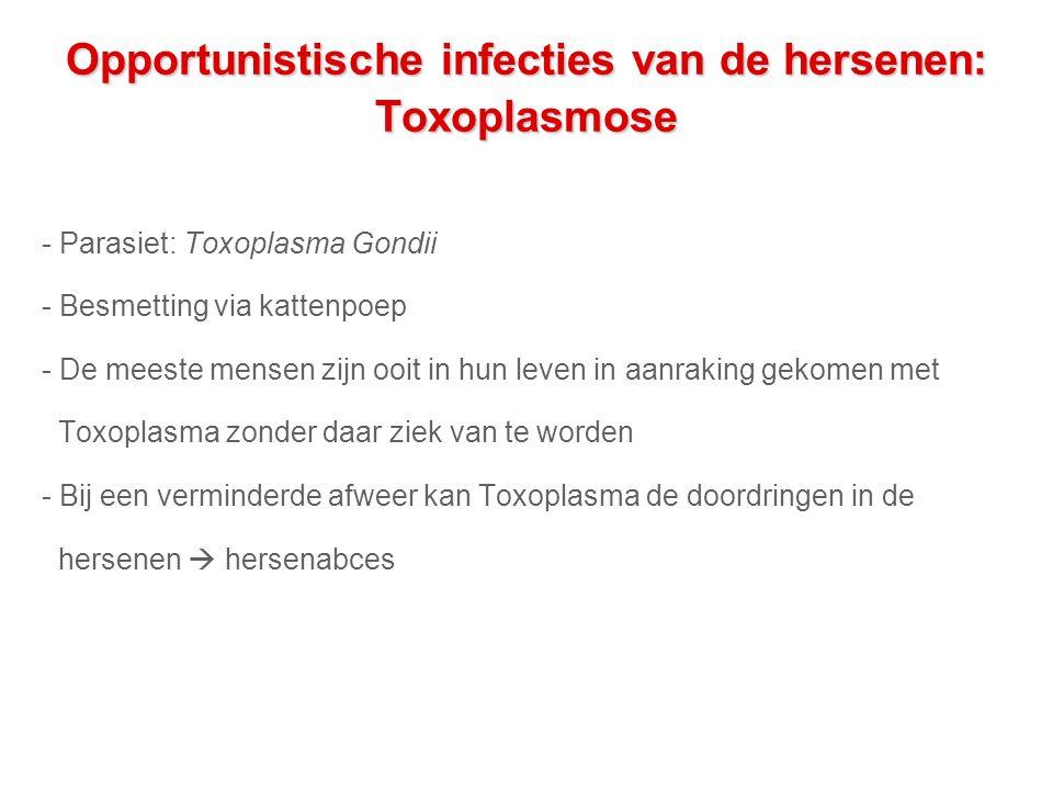 Opportunistische infecties van de hersenen: Toxoplasmose - Parasiet: Toxoplasma Gondii - Besmetting via kattenpoep - De meeste mensen zijn ooit in hun leven in aanraking gekomen met Toxoplasma zonder daar ziek van te worden - Bij een verminderde afweer kan Toxoplasma de doordringen in de hersenen  hersenabces