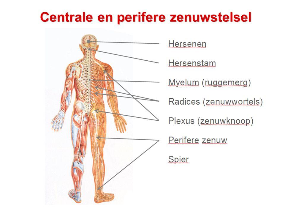 HIV en het perifere zenuwstelsel: Plexus - Niet zo heel veel vaker bij HIV - Evt door ingroei van een lymfoom - Evt door diabetes - Heftige schouderpijn, verminderde kracht en gevoel in de arm - Aanvullend onderzoek: ElectroMyoGram (EMG)  zenuwen doormeten