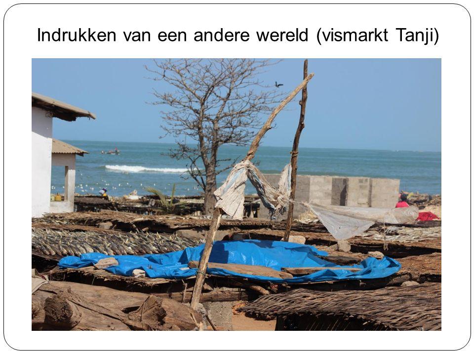 Indrukken van een andere wereld (vismarkt Tanji)