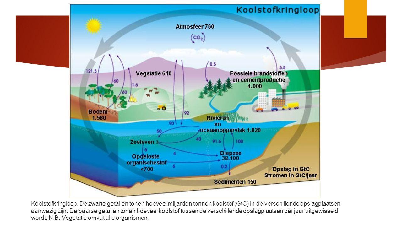  Voordelen van biobrandstof/biomassa  veel schoner is dan gewone brandstof;  minder CO2 (verbetering van 70%) tov fossiel;  Nadelen van biobrandstof  Productie vergt veel water 500 tot 1.000 liter water per kilo droge biomassa.