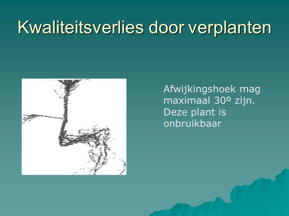Kwaliteitsverlies door verplanten Afwijkingshoek mag maximaal 30º zijn. Deze plant is onbruikbaar