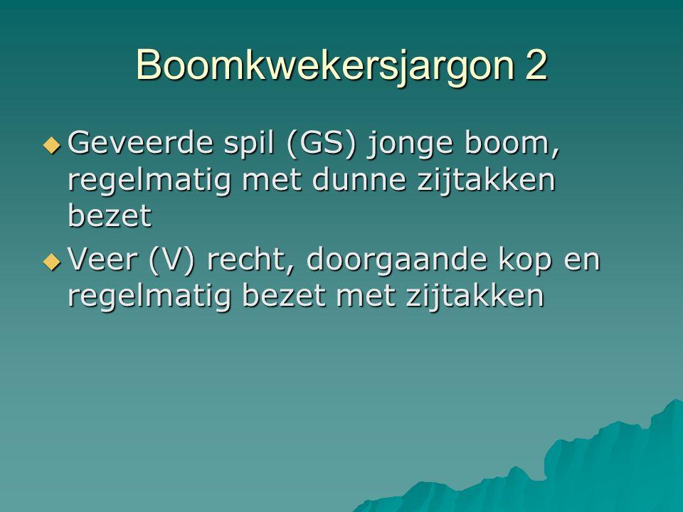 Boomkwekersjargon 2  Geveerde spil (GS) jonge boom, regelmatig met dunne zijtakken bezet  Veer (V) recht, doorgaande kop en regelmatig bezet met zij