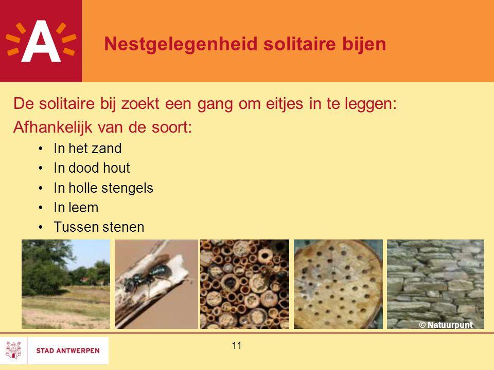 11 Nestgelegenheid solitaire bijen De solitaire bij zoekt een gang om eitjes in te leggen: Afhankelijk van de soort: In het zand In dood hout In holle