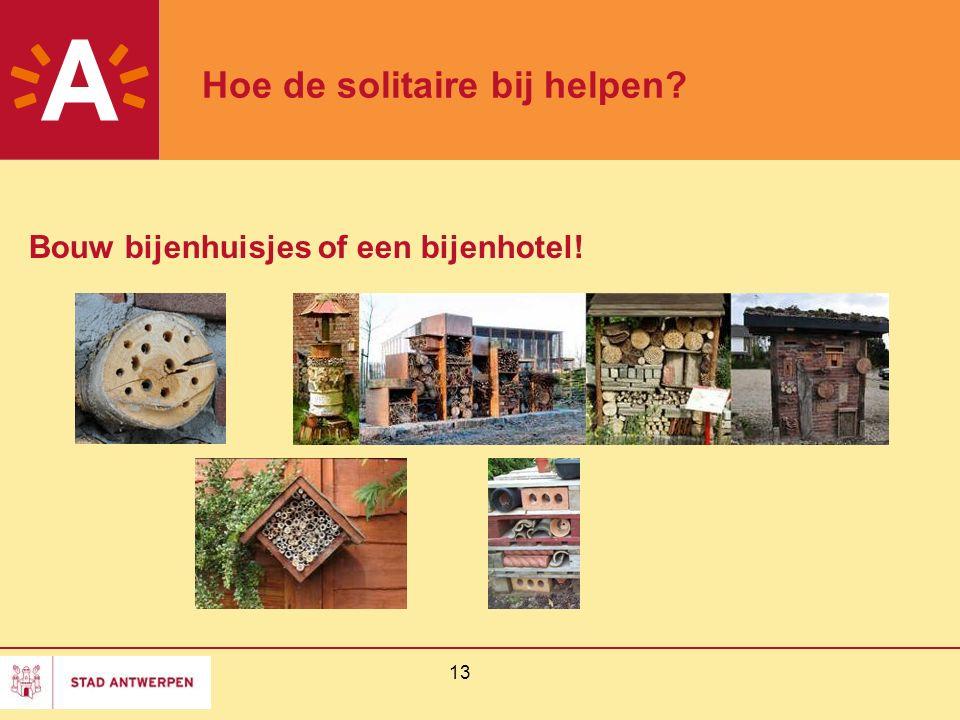 13 Hoe de solitaire bij helpen? Bouw bijenhuisjes of een bijenhotel!